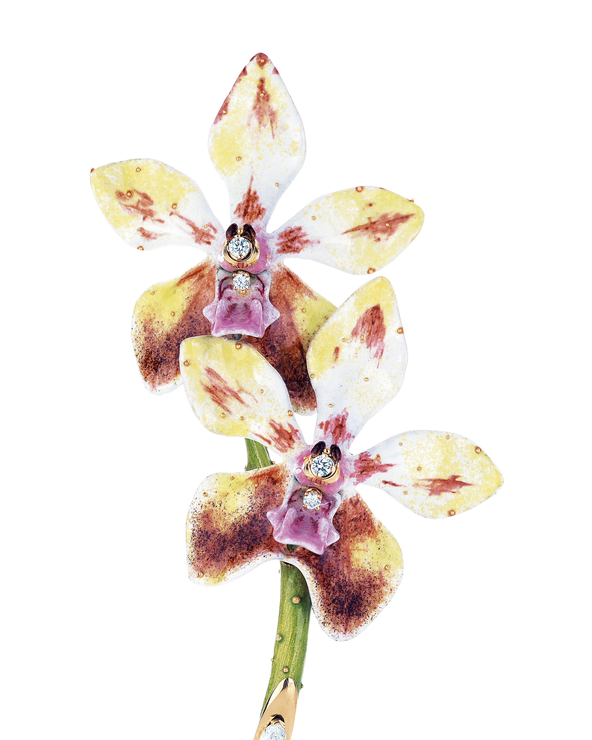 vividpurpleorchidshot scott west orchid diamond victorian